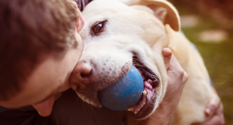 Ways to show your dog you love him