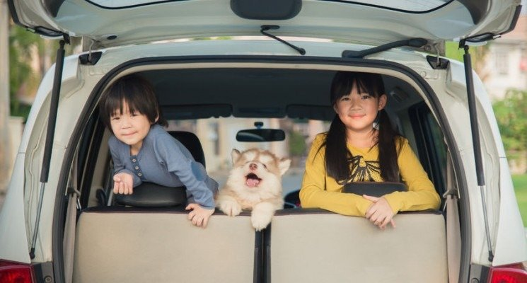 happy children and siberian husky puppy sitting in the car