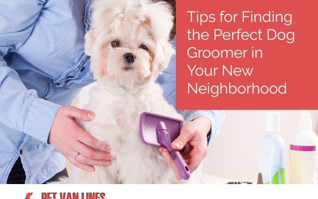 finding the perfect dog groomer