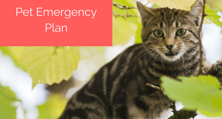 how-to-create-a-pet-emergency-plan