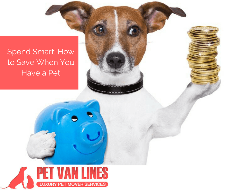 spend-smart-how-to-save-when-you-have-a-pet-1