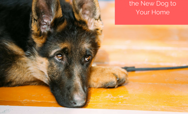 tips-for-introducing-the-new-dog-to-your-home
