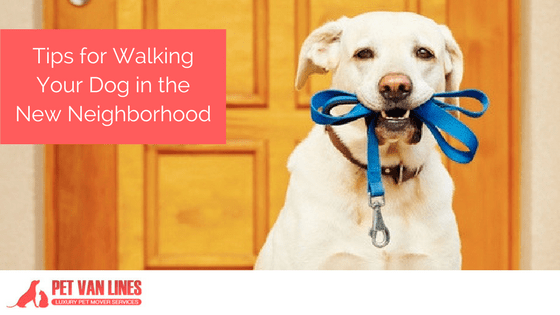 Tips for Walking Your Dog in the New Neighborhood
