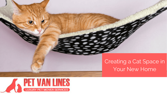 creating a cat space in your new home