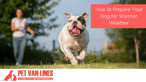 prepare your dog for warmer weather