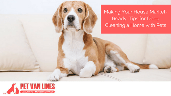making your house market-ready, cleaning a home with pets