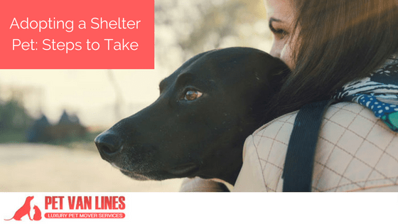 adopting a shelter pet