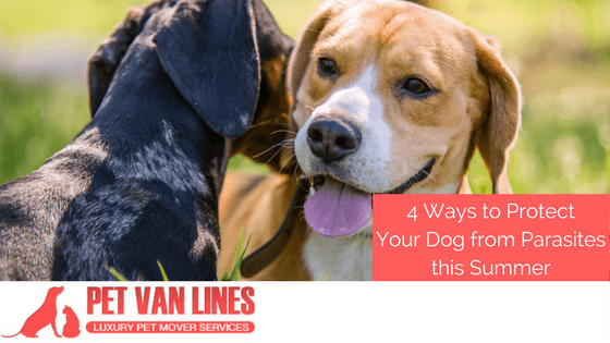 protect your dog from parasites this summer