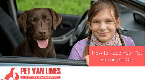 keep your pet safe in the car