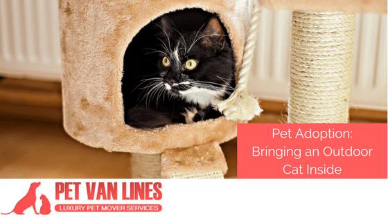 Pet Adoption Bringing An Outdoor Cat