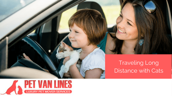 traveling long distance with cats