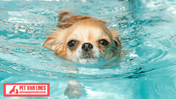 Tips for Safe Summer Swimming With Your Dog