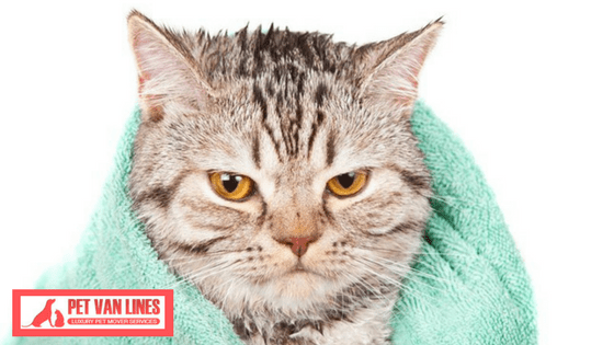 Cat Bathing Tips: How to Give Your Kitty a Bath!