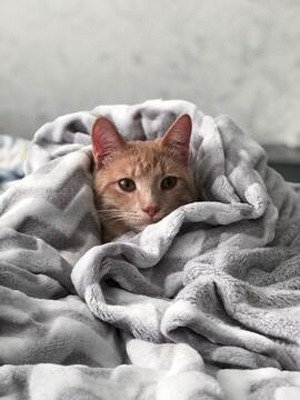 Cat wrapped in a gray blanket, for information on cat moving made easy.