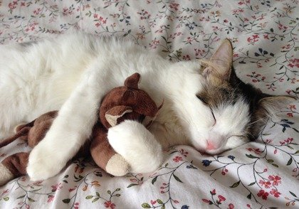 Cat lying on a comforter with a toy, for information on how to ship a cat.