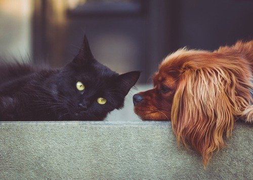 Black cat and a brown dog lying down; for information on dog and cat shipping services from Pet Van Lines