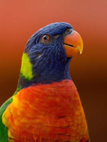 Colorful parrot as an option for a pet list; and for facts about pet transporation service.