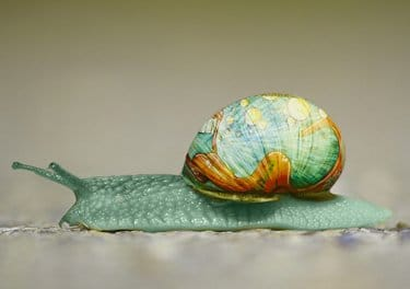 Mint green snail as a possibilty for a pet list, and for information about pet transportation services.